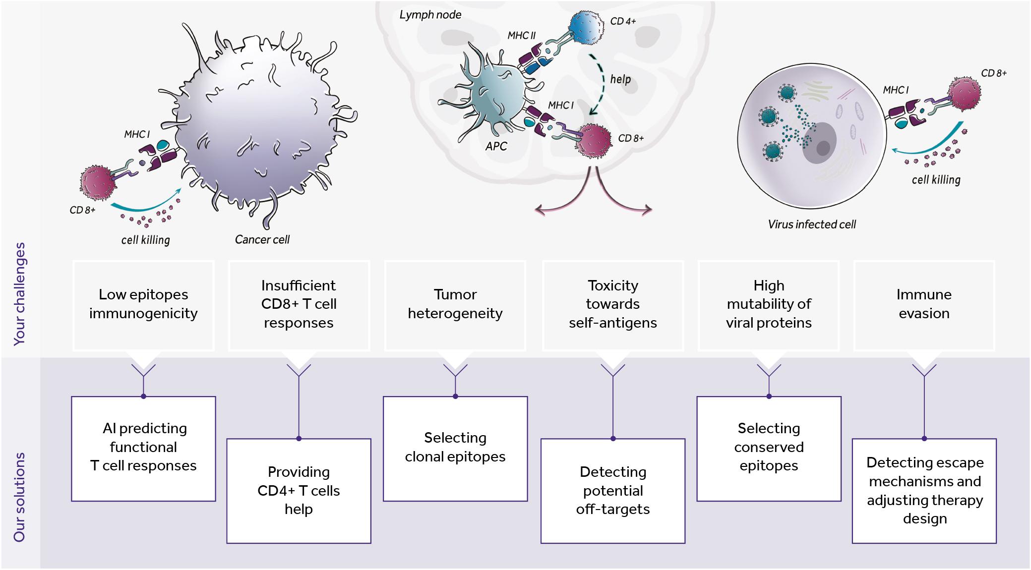Immunity by design schema