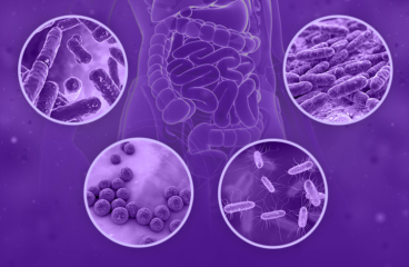 Gut microbiota's road to clinical utilization. From bathroom to bedside.